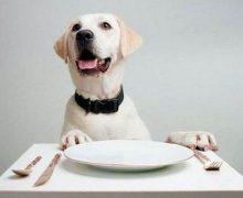 Come scegliere il giusto cibo per i vostri cani