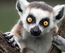 Come osservare gli animali selvatici