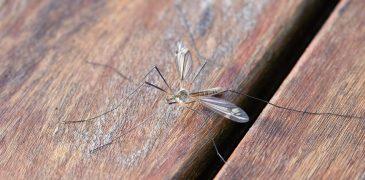 Allontanare le zanzare da casa
